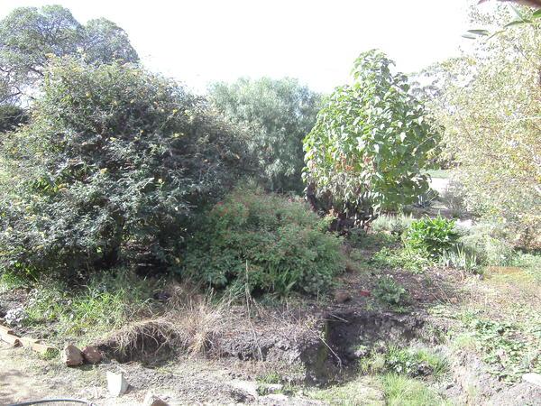 Garden-ALDI-11.jpeg
