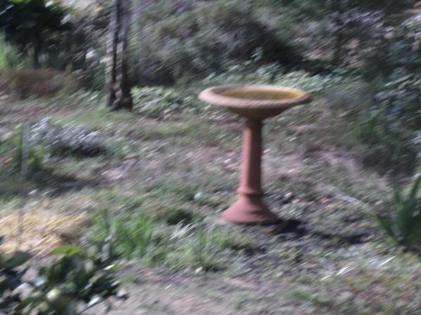 Garden-ALDI-3.jpeg
