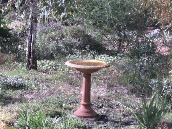 Garden-ALDI-7.jpeg