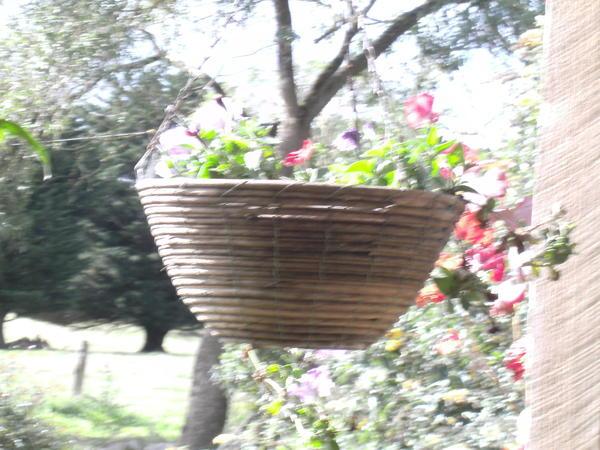 Garden-ALDI-9.jpeg