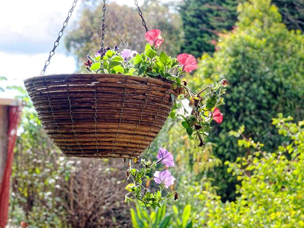 Garden-oly-3.jpeg
