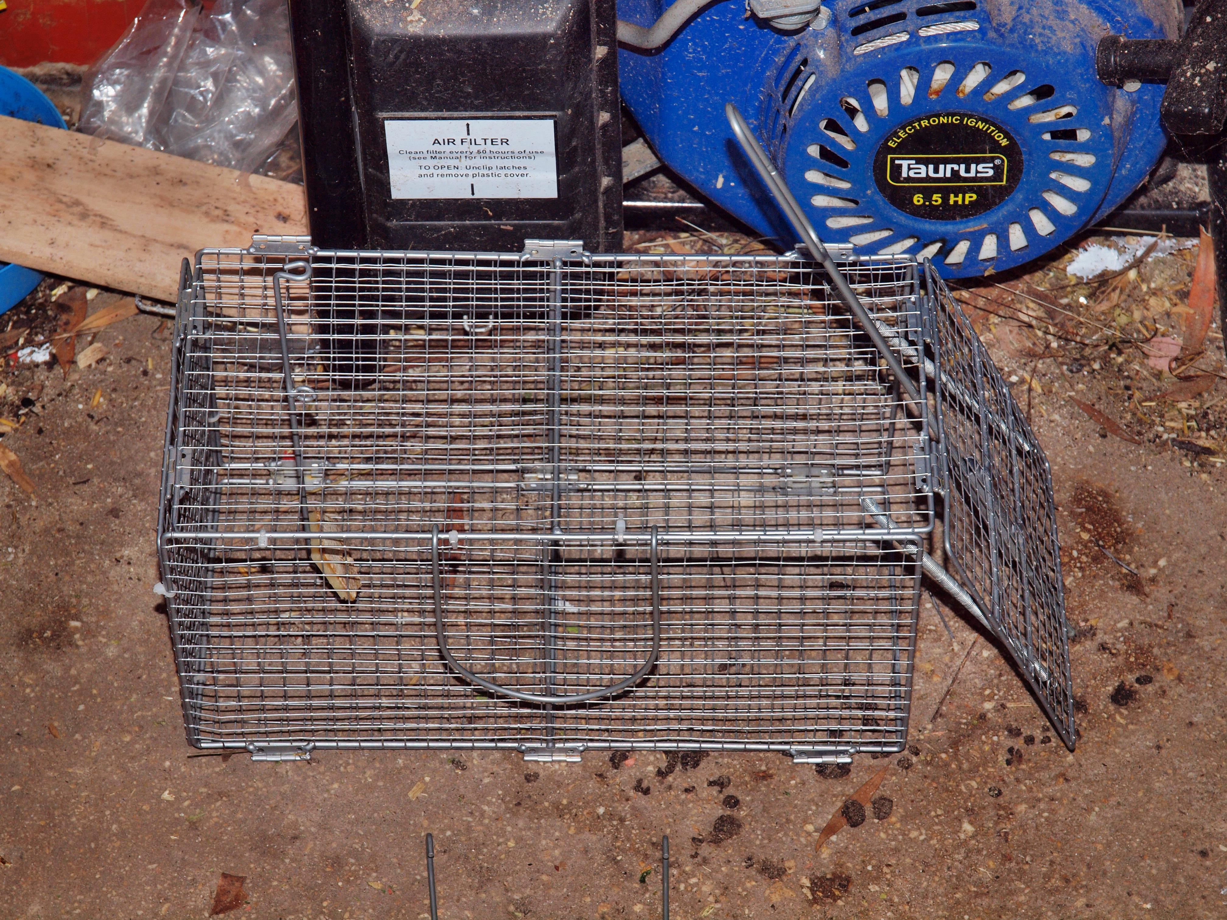 Rat-cage.jpeg