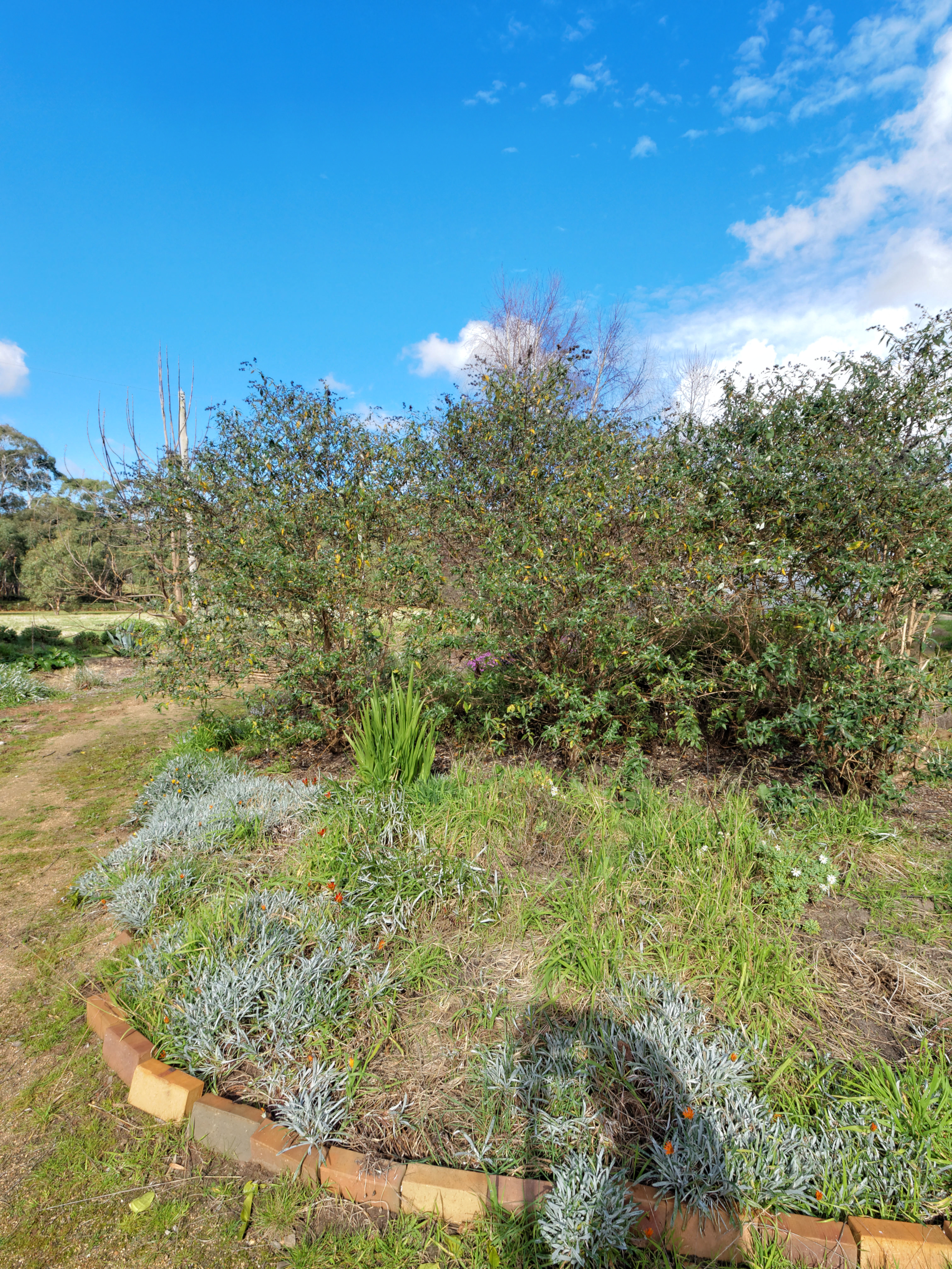 garden-path-ne-0.jpeg