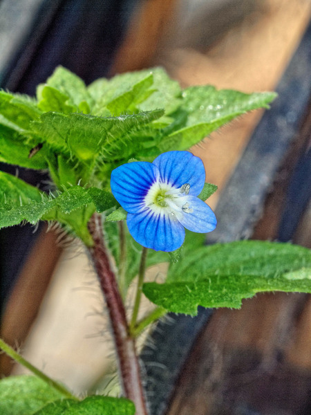 Mystery-flower.jpeg