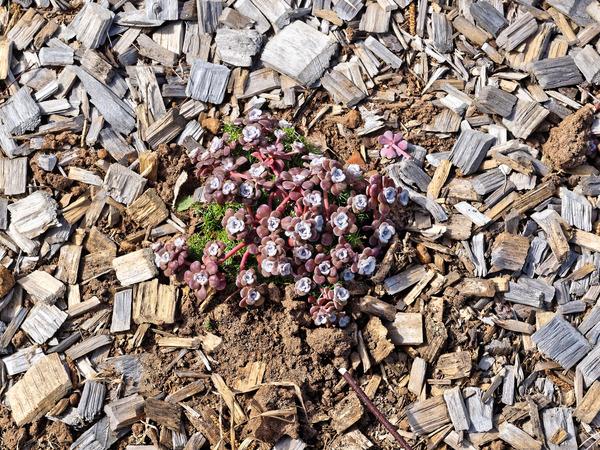 Mystery-succulent-2.jpeg