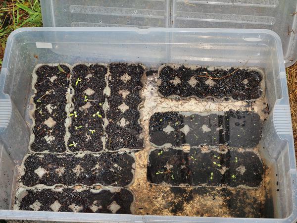 Seed-tray.jpeg