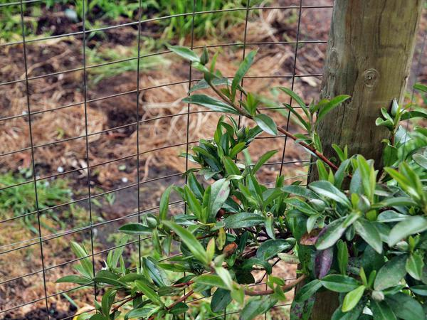 Fence-3.jpeg
