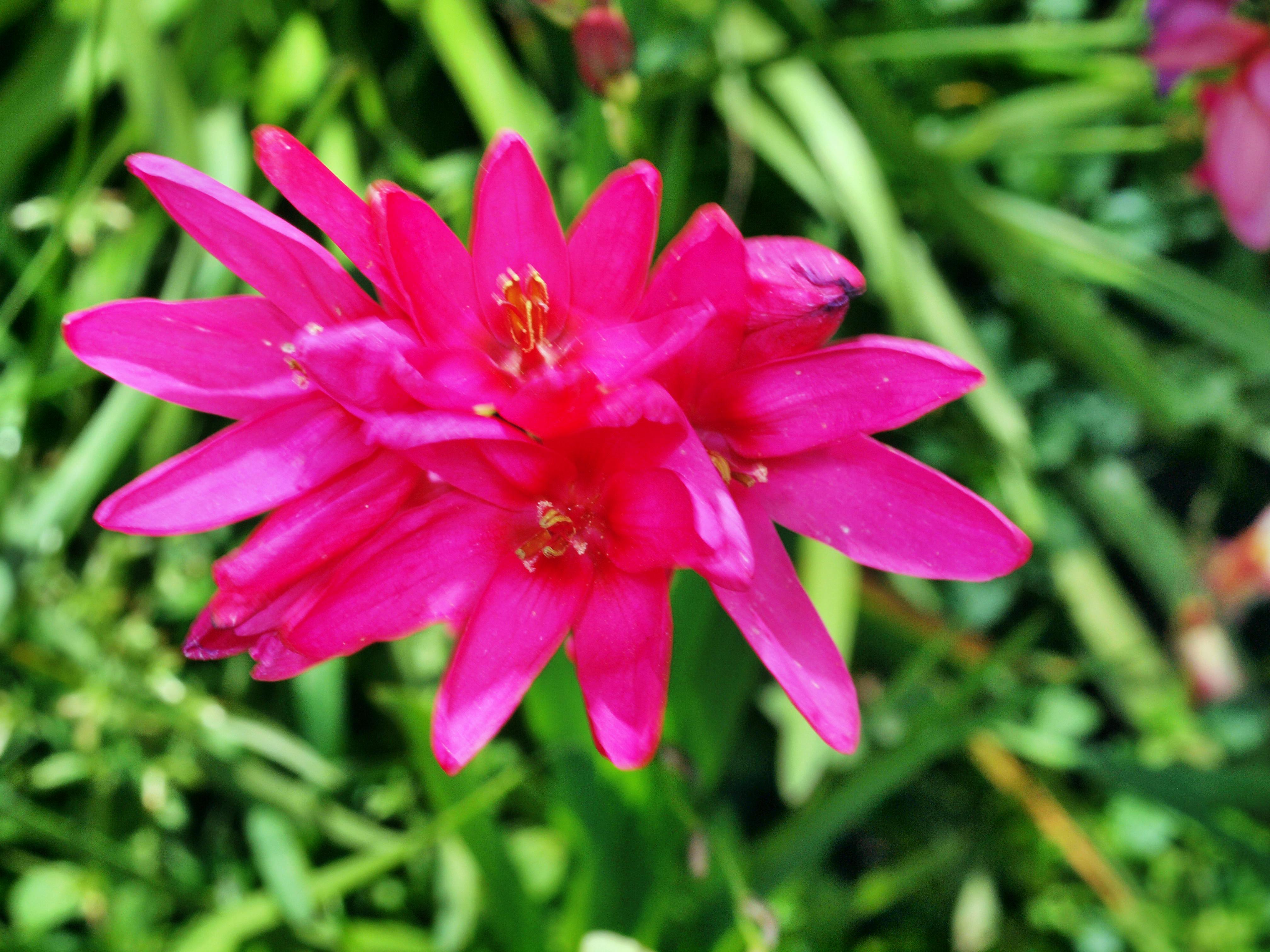 Fritillaria-4.jpeg