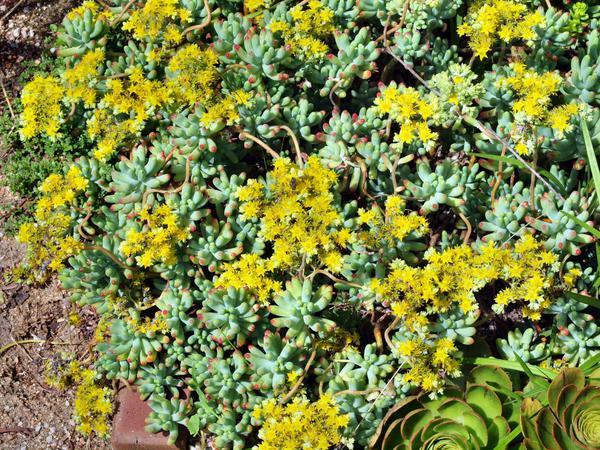 Succulent-1.jpeg