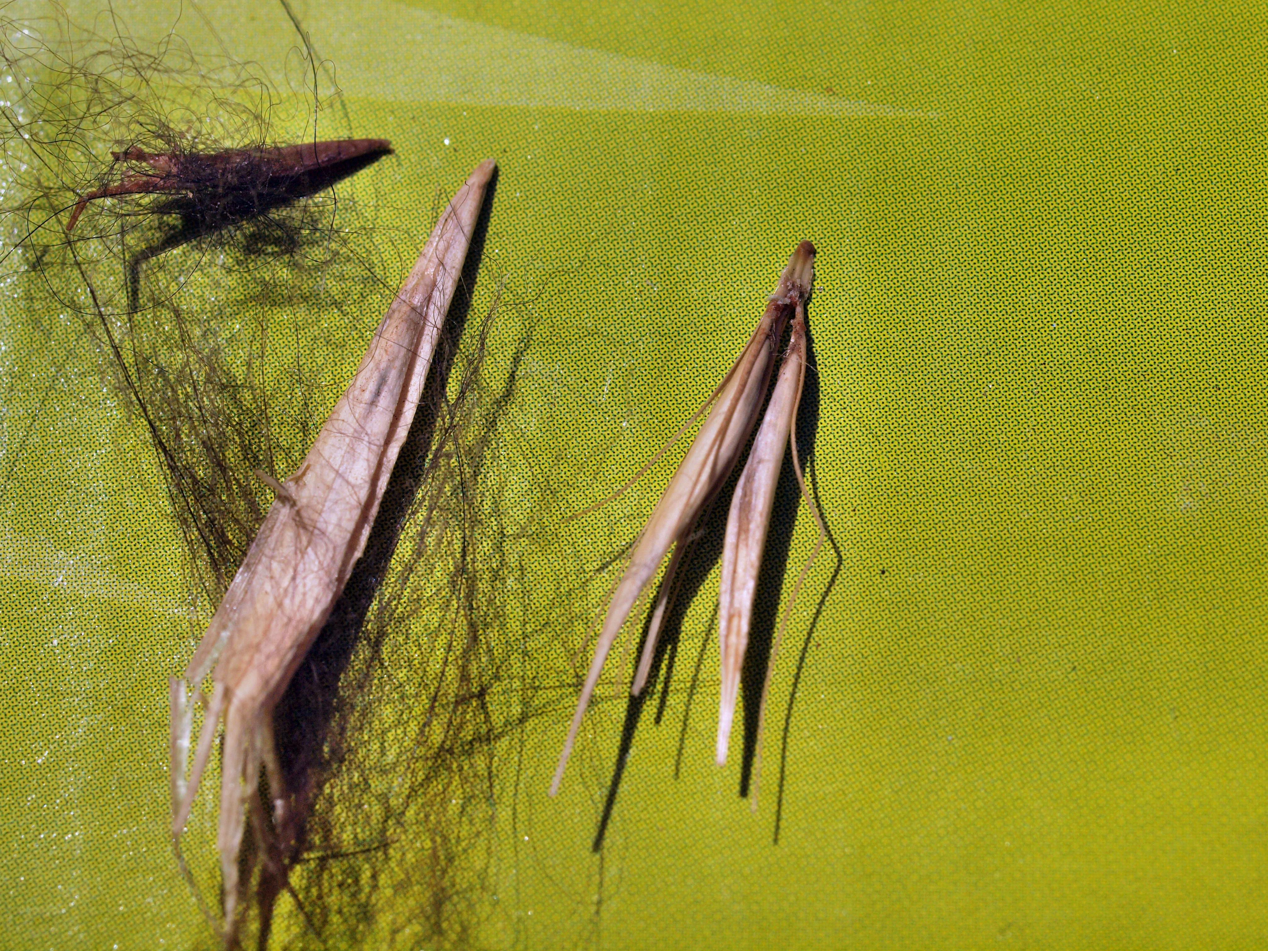 Grass-seed-1.jpeg