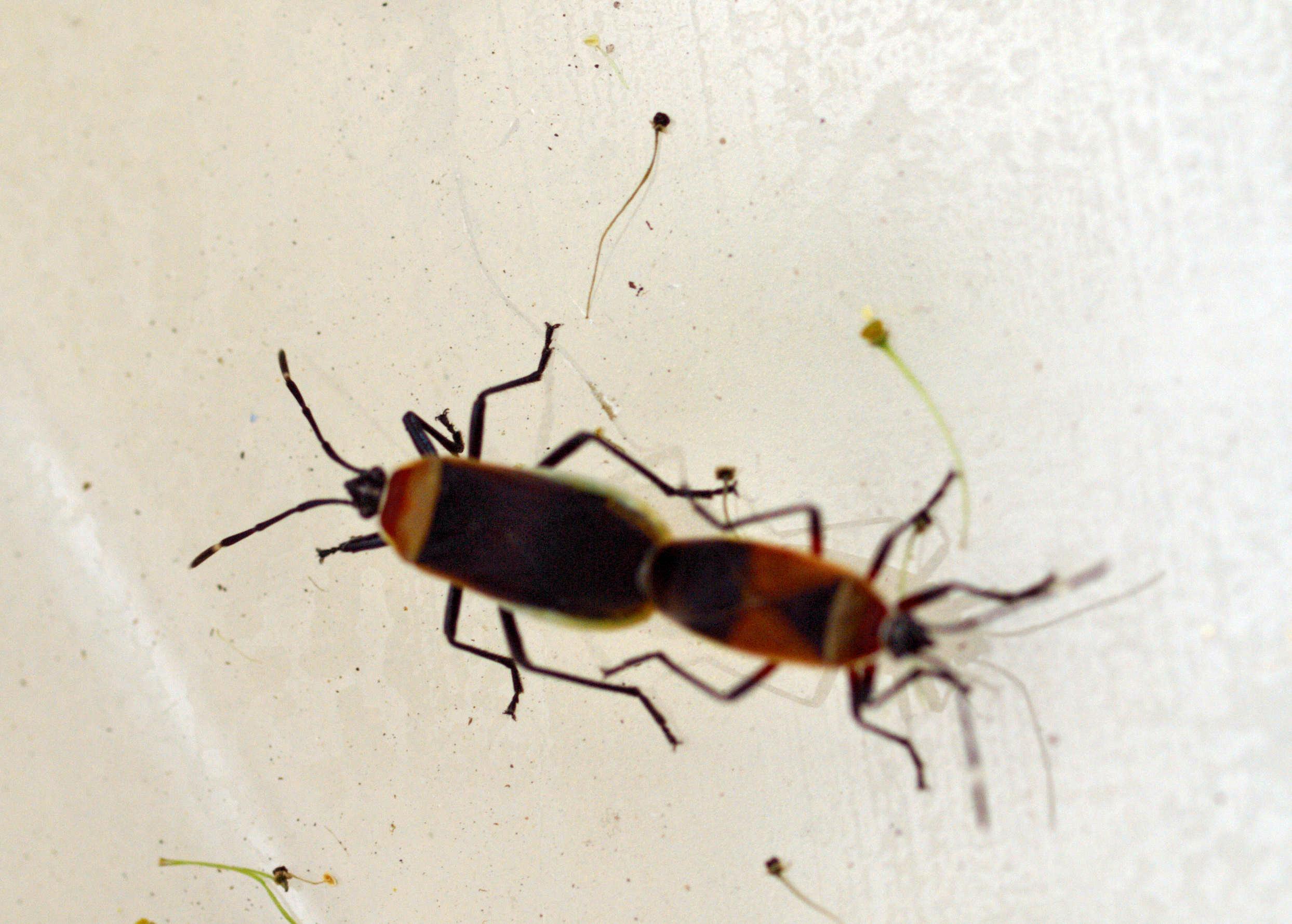 bugs-0.jpeg