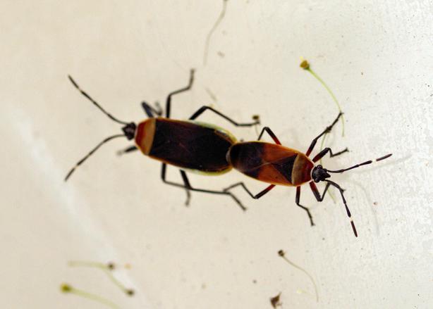 bugs-1.jpeg