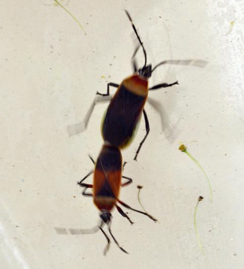 bugs-2.jpeg