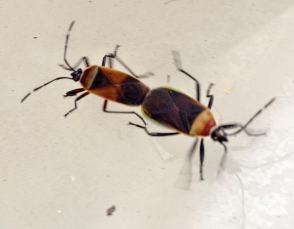 bugs-3.jpeg
