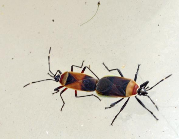 bugs-4.jpeg