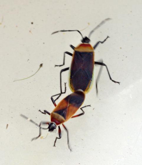bugs-5.jpeg