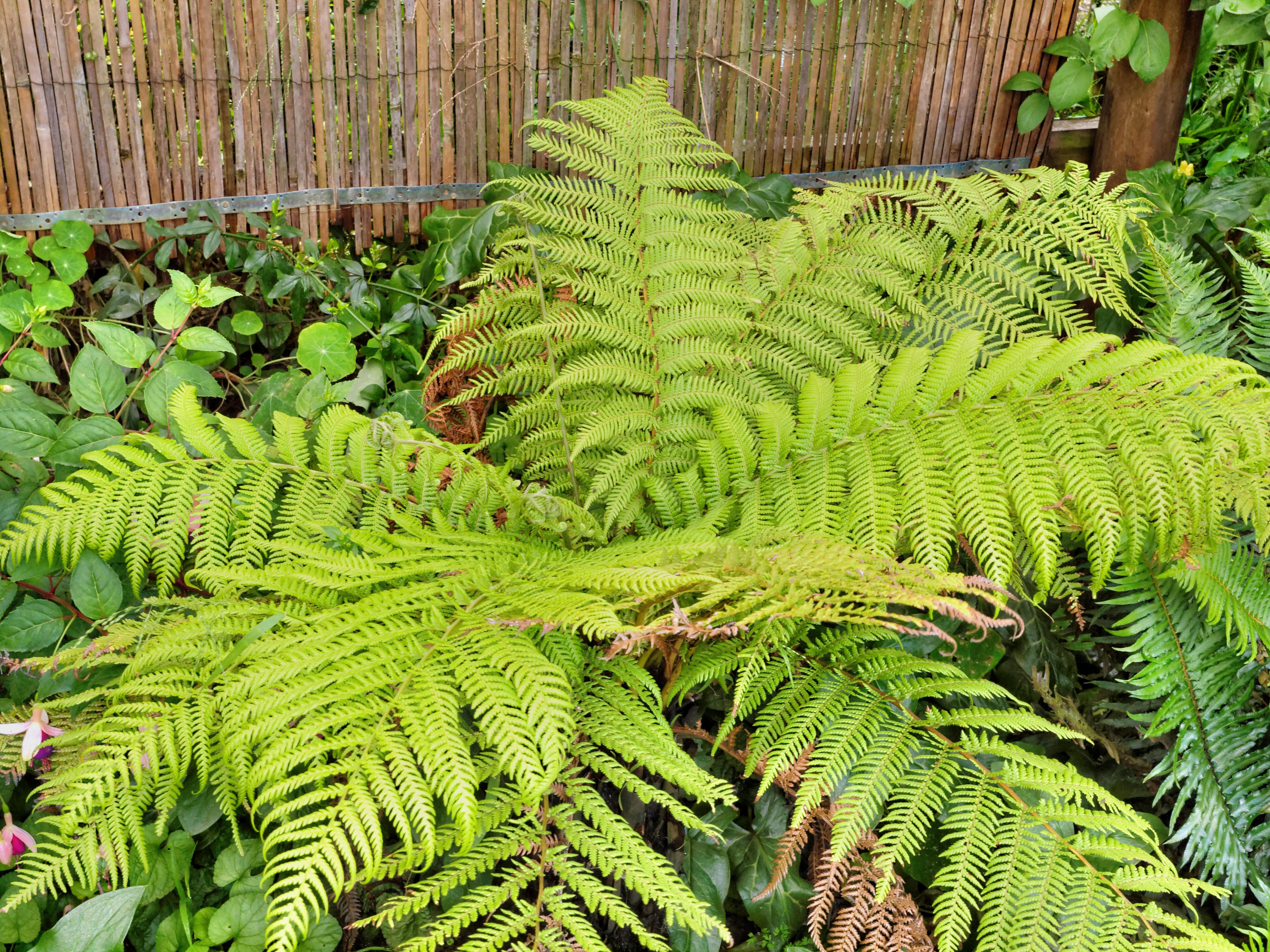 Tree-fern-1.jpeg