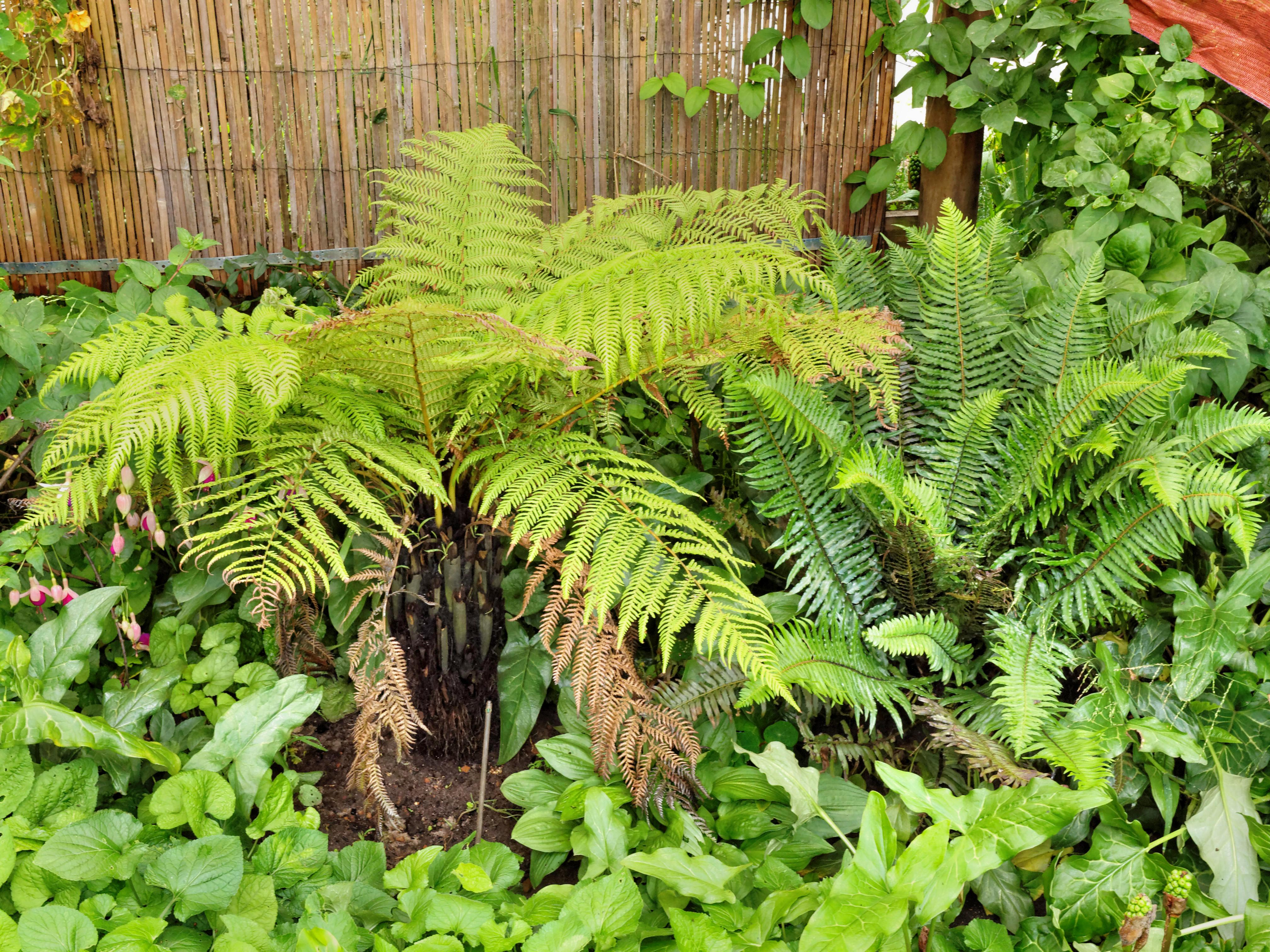 Tree-fern-2.jpeg