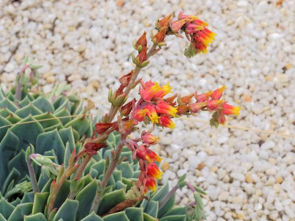 Succulent-flower-1.jpeg
