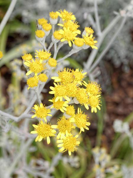 Succulent-flower-5.jpeg