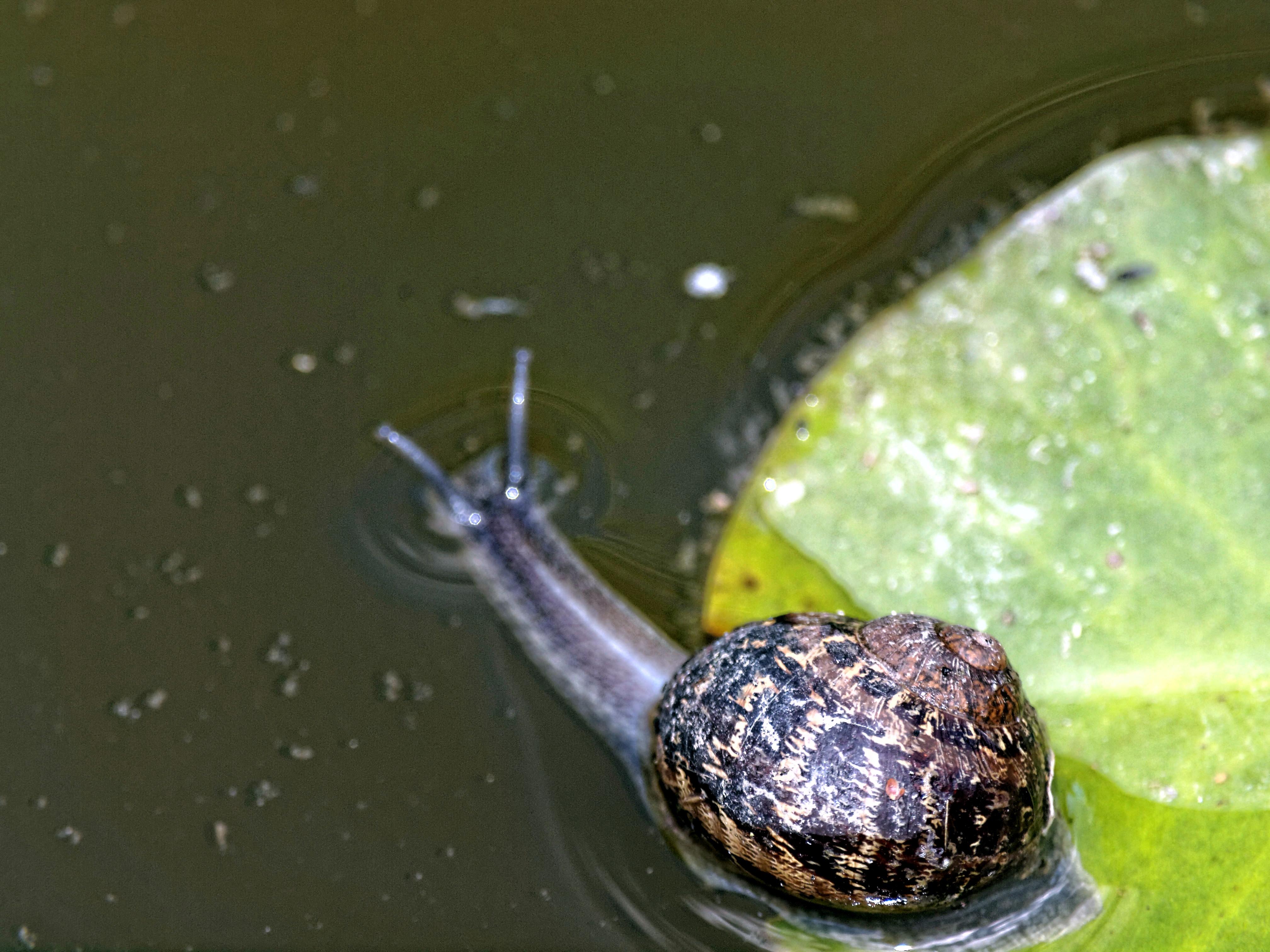 Snail-2.jpeg