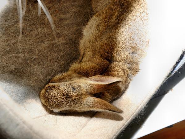 Lilac-rabbit-2.jpeg