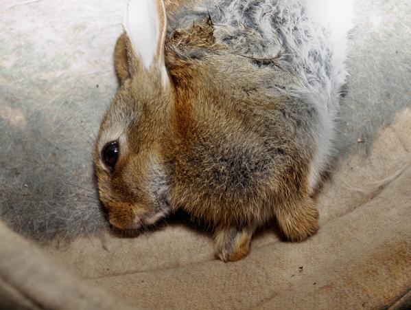 Lilac-rabbit-4.jpeg