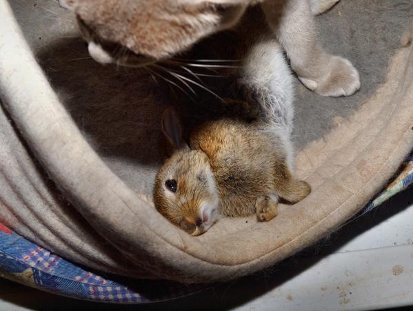 Lilac-rabbit-5.jpeg