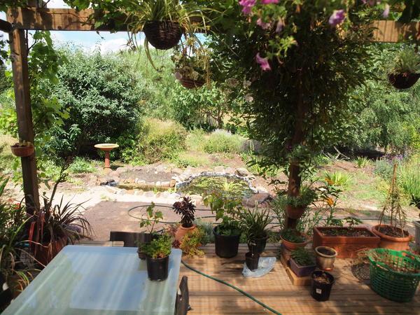 From-verandah-1.jpeg