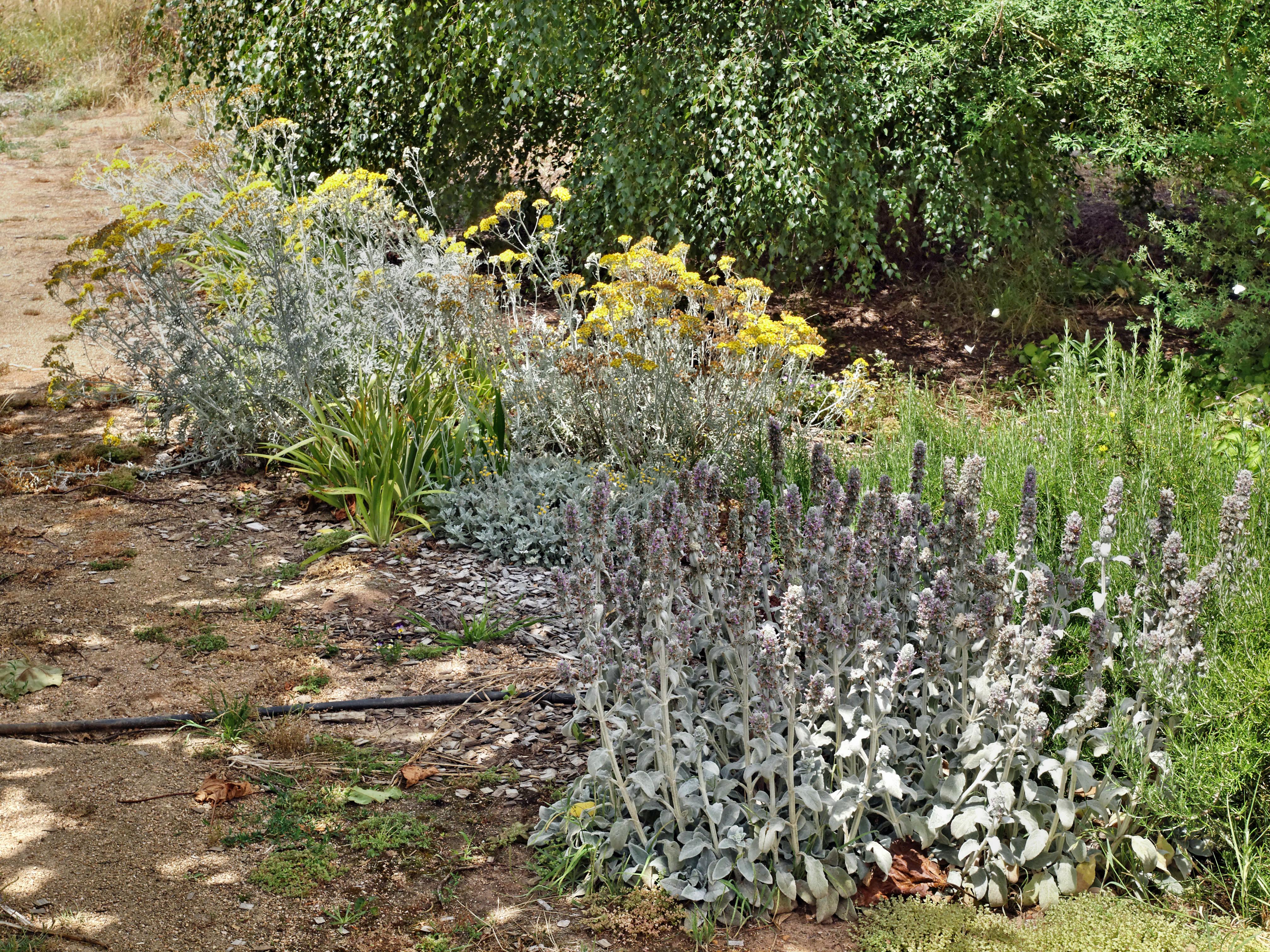 East-garden.jpeg
