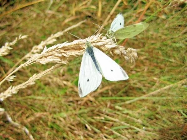 Butterflies-1.jpeg