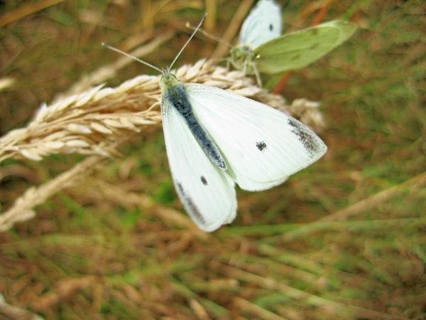 Butterflies-2.jpeg