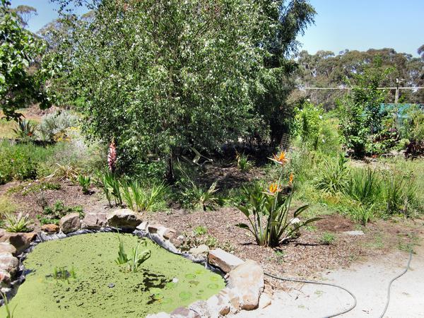 Garden-IXY.jpeg