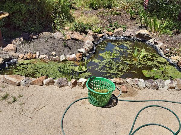 Pond-1.jpeg