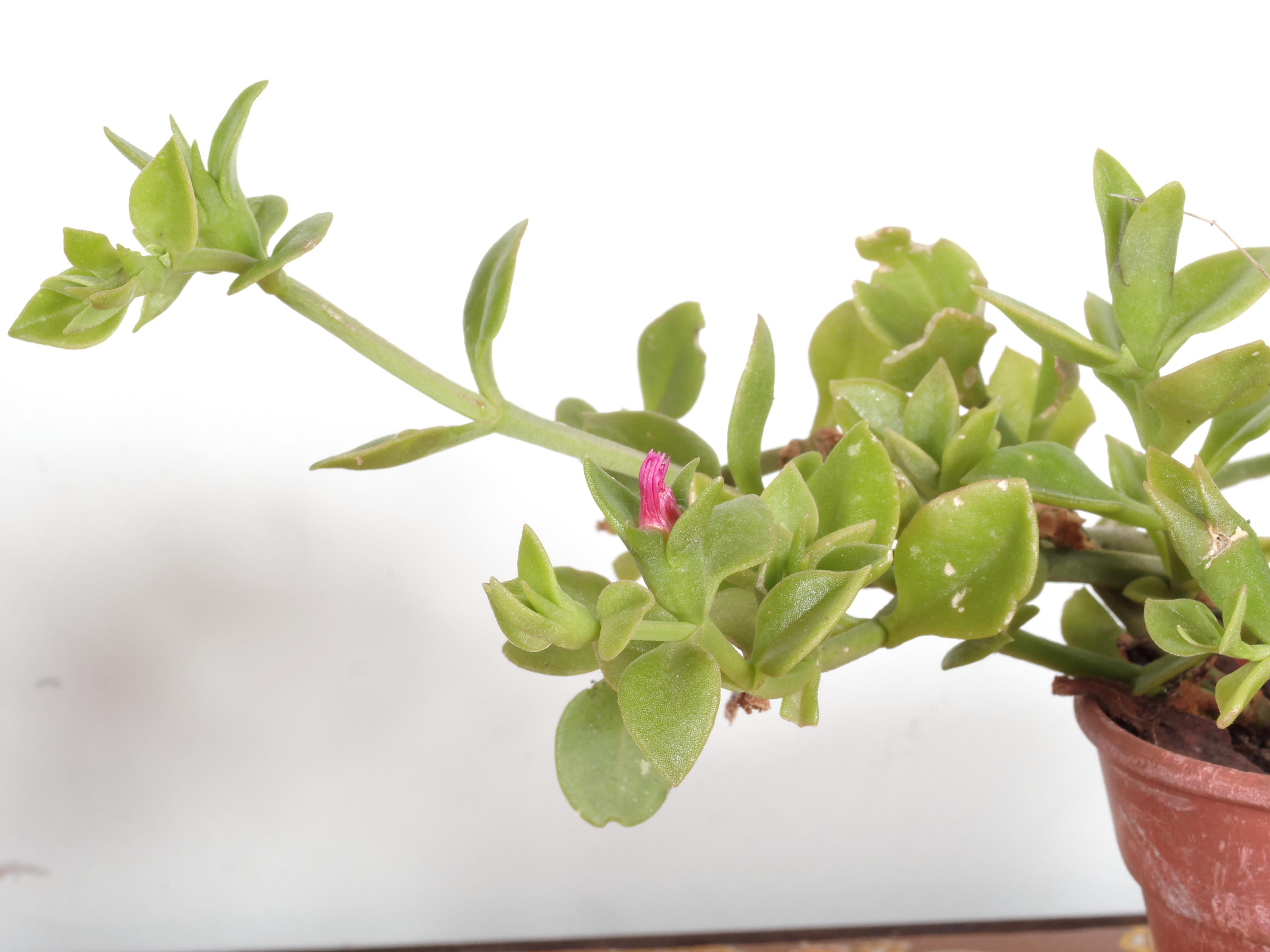 Mystery-flower-2.jpeg