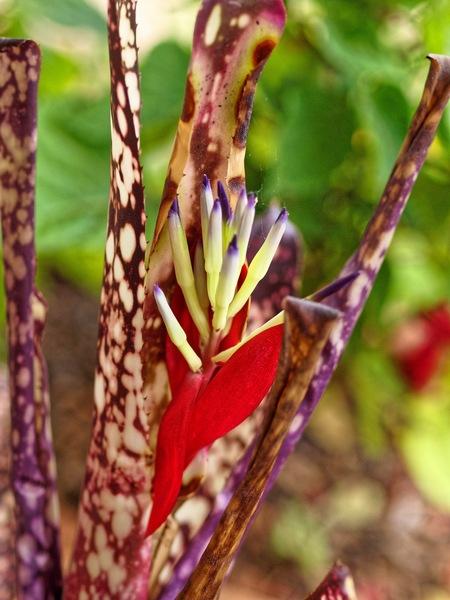 Bromeliad.jpeg