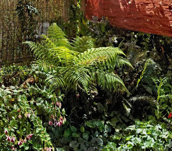 garden-se-Nikon-detail.jpeg