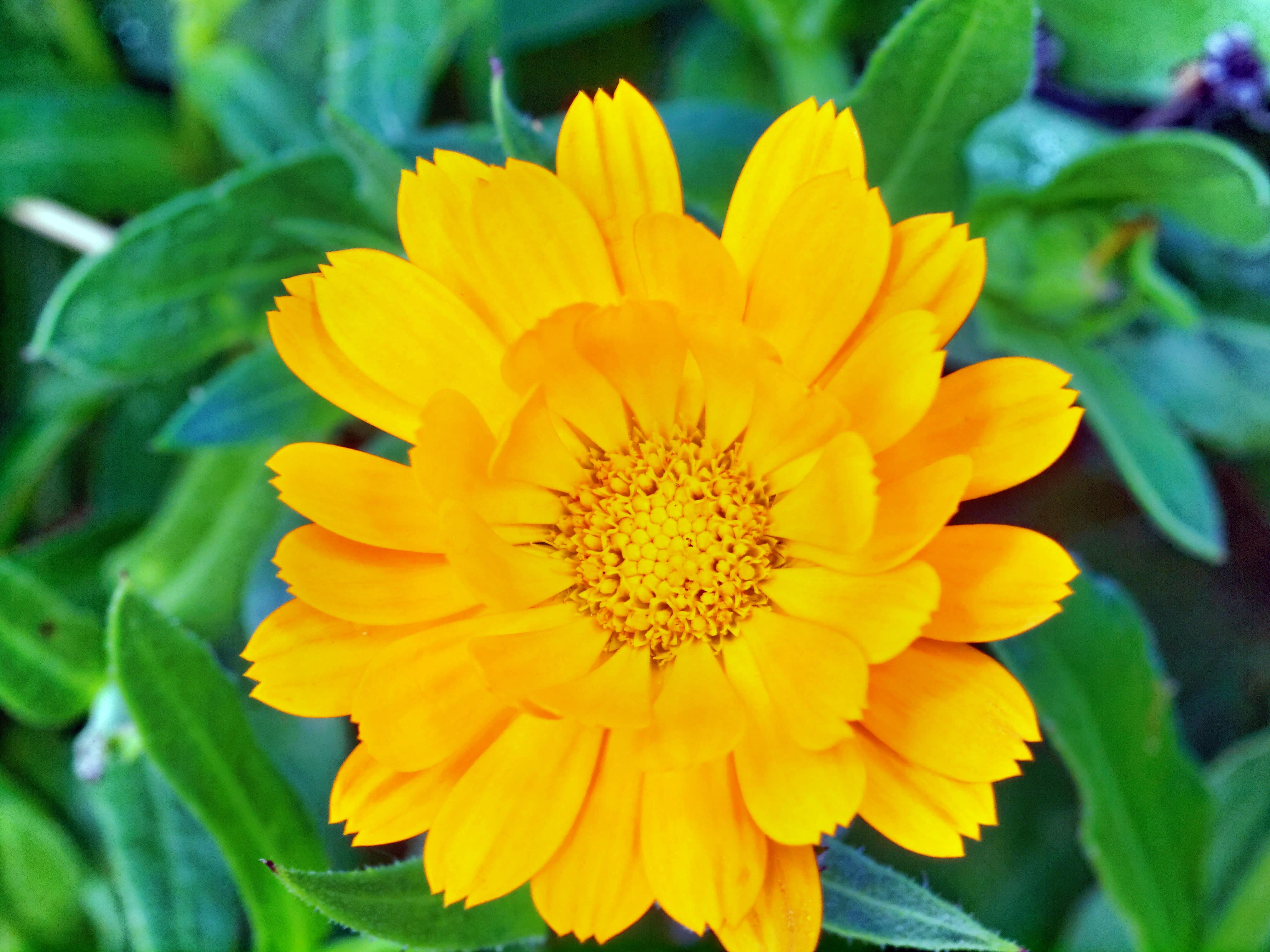 This should be Calendula.jpeg.  Is it missing?