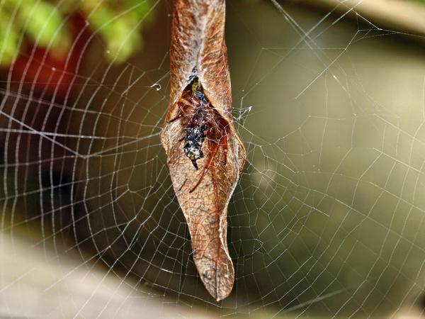 Spider-3.jpeg
