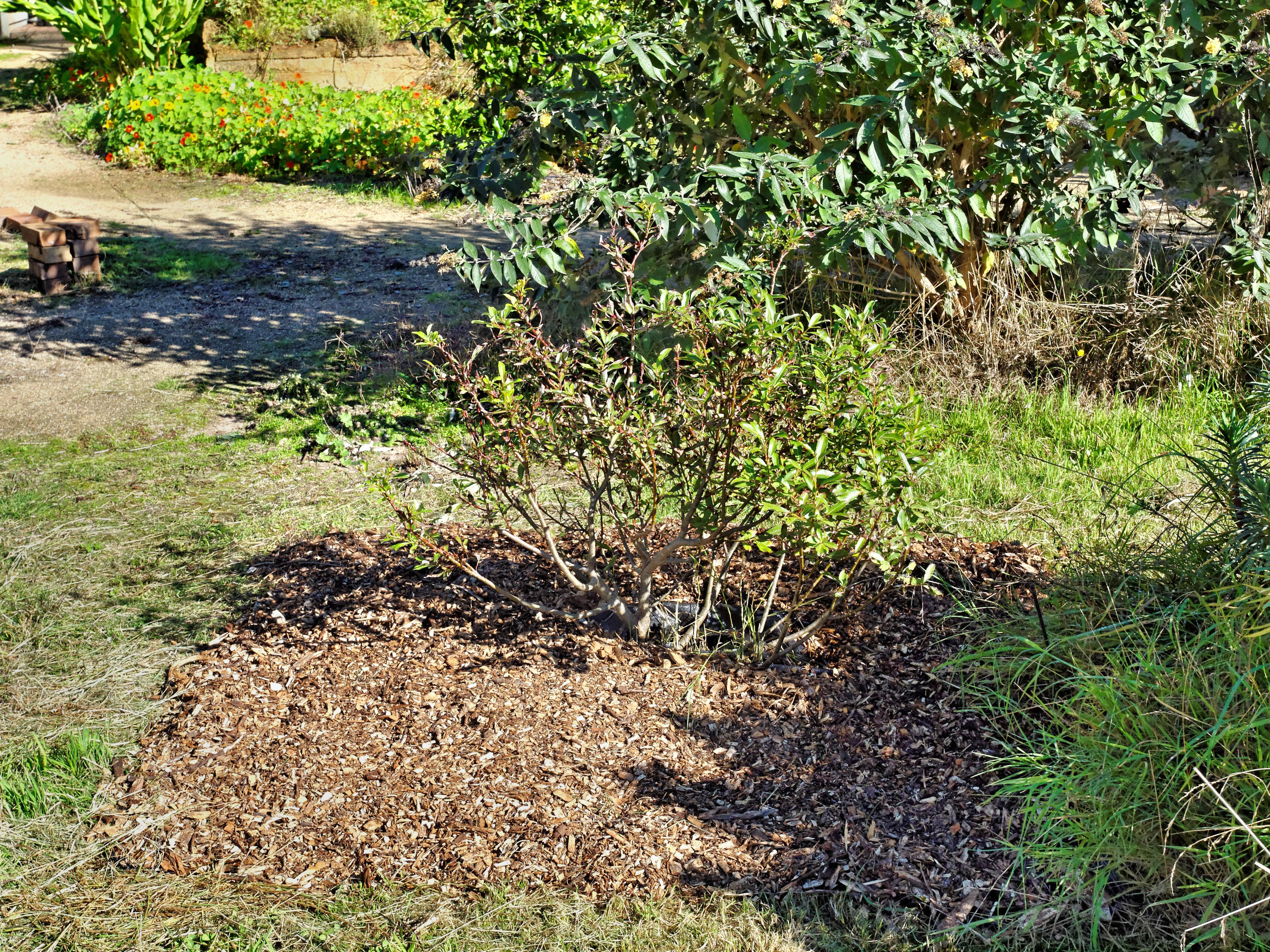 Salix.jpeg