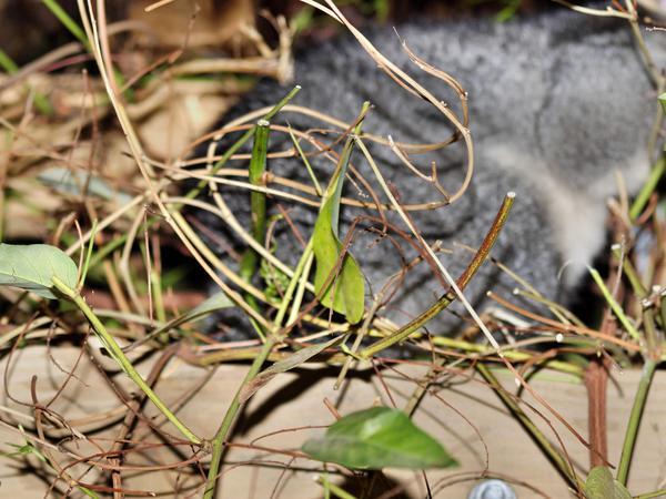 Possum-1.jpeg