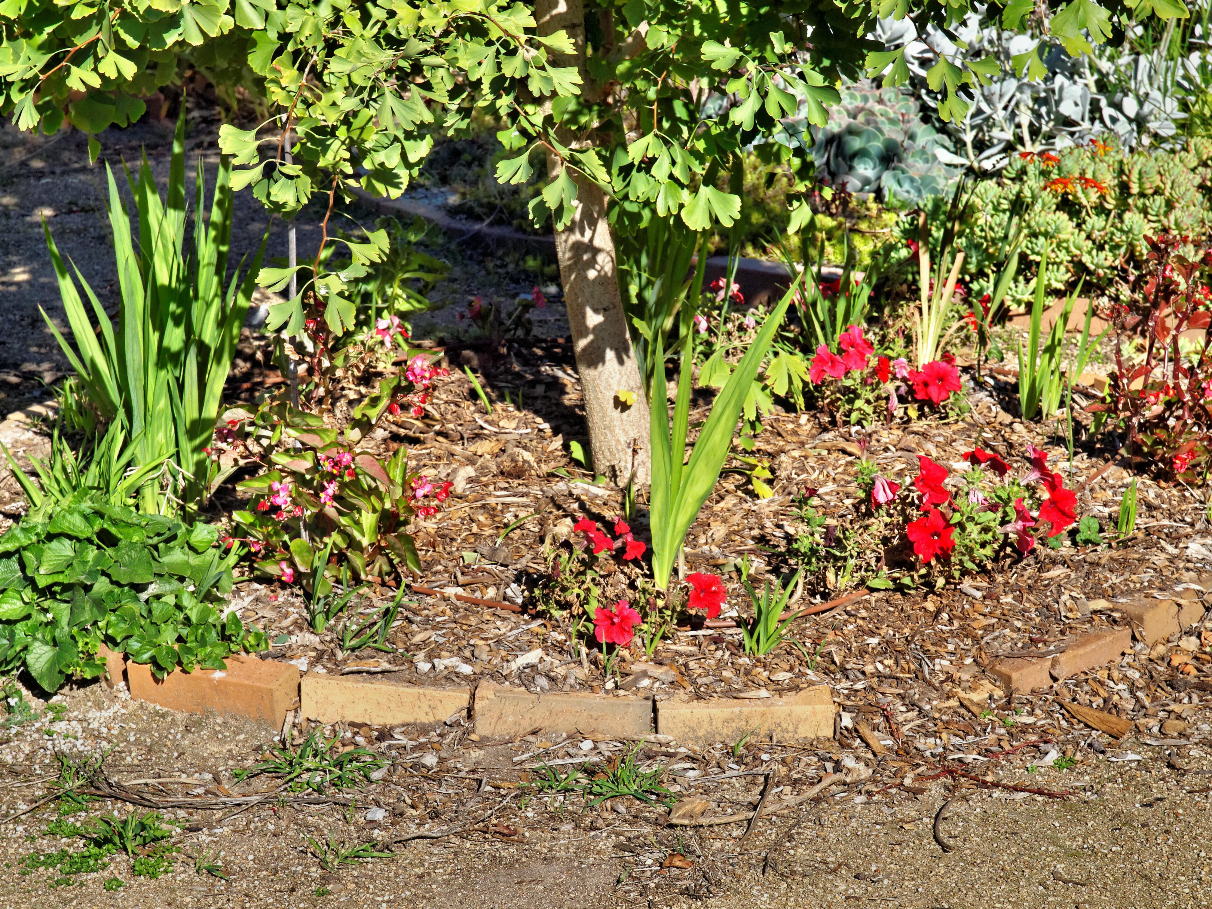 Begonia-Petunia.jpeg