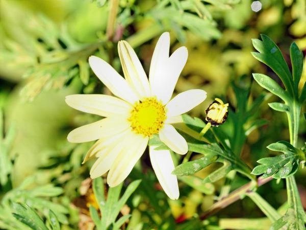 Daisy-1.jpeg
