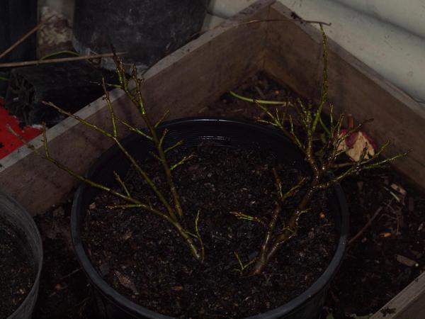 Mystery-shrub-10.jpeg
