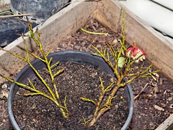 Mystery-shrub-15.jpeg