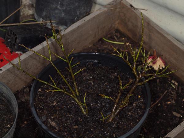 Mystery-shrub-7.jpeg