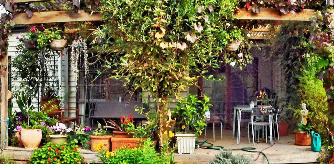 garden-centre-DxO-detail-ashampoo.jpeg