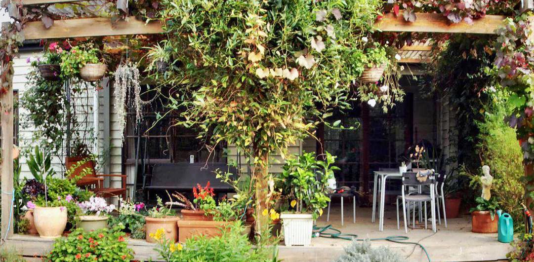 garden-centre-detail-ashampoo.jpeg