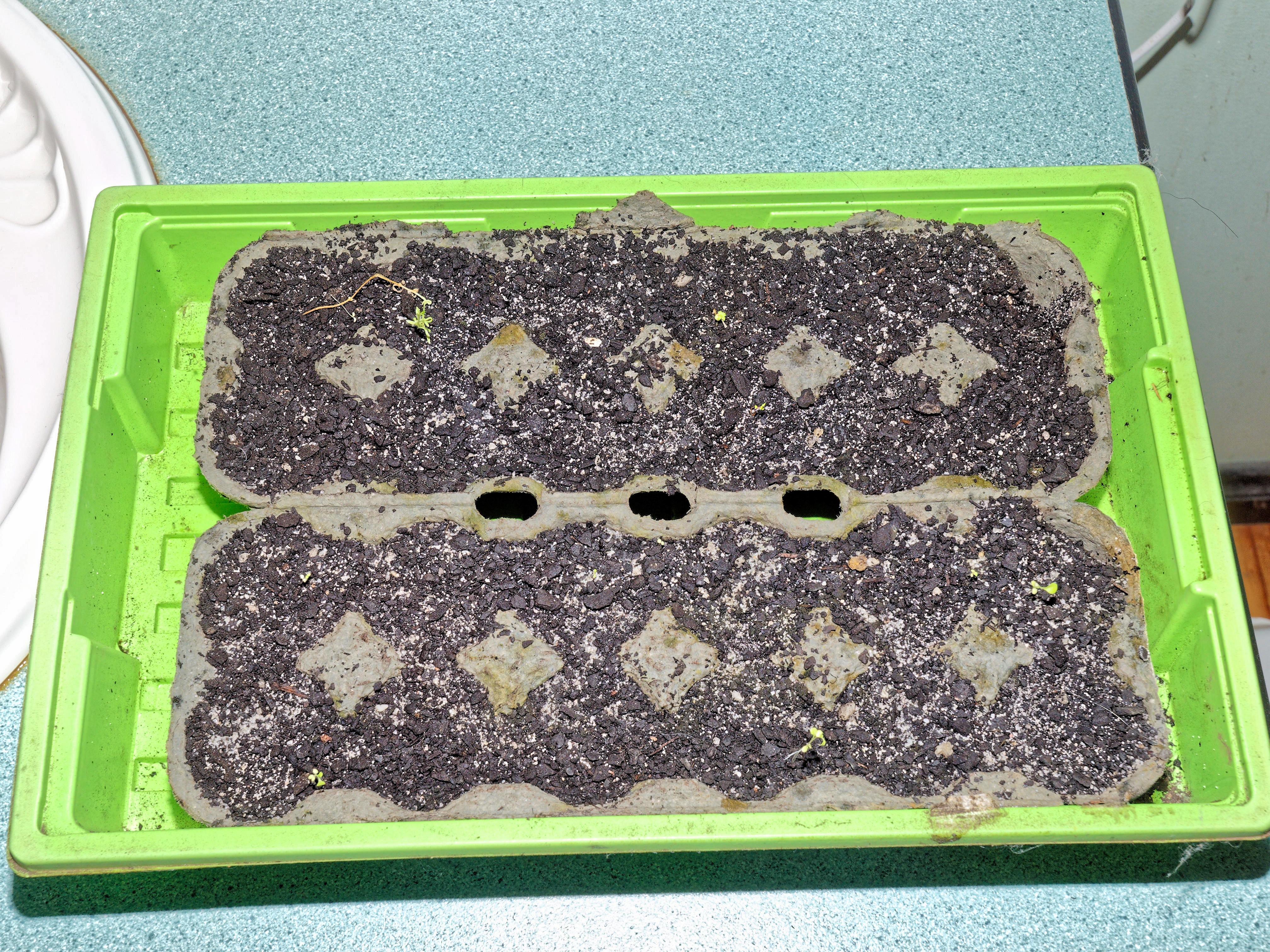 Seedlings-2.jpeg