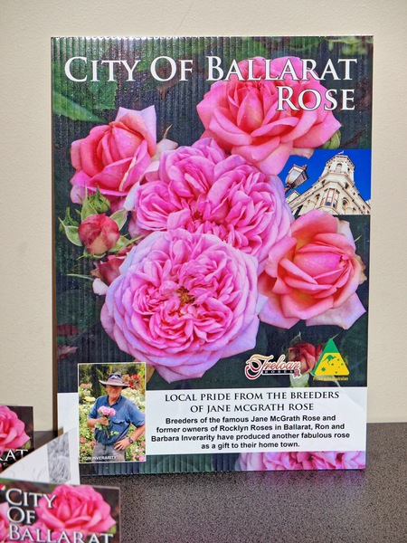 Ballarat-rose-3.jpeg